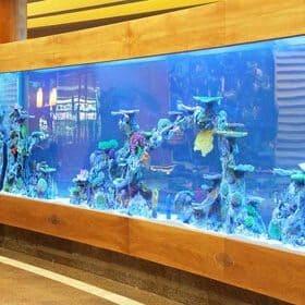 Turnkey Aquarium Designer Company, Fish Supplier | TDE AQUA