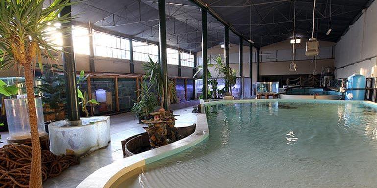 Aquarium Habitat Replication Environment