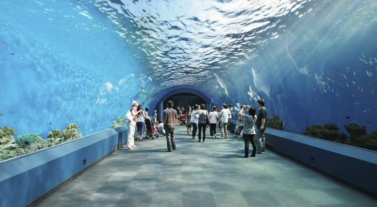 Aquarium Tunnels Design