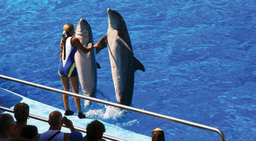 Dolphinarium Designer