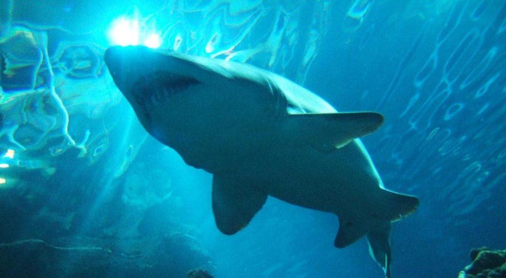 Large Shark Aquarium Design