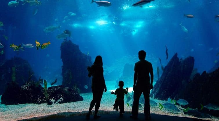 Public and Commercial Aquariums Manufacture
