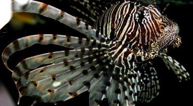 Mediterranean Fish Collector and Supplier for Aquariums
