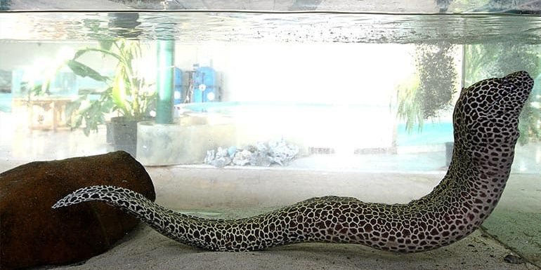 TDE is a Fish Supplier of tropical species for Large Aquariums