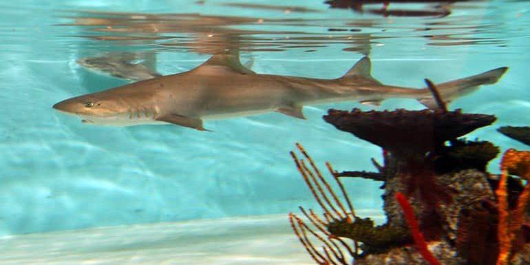 Turnkey Aquarium Designer Company